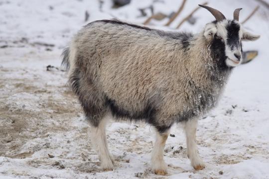 f1a4cbbde24 Le pashmina en cachemire   un accessoire incontournable en hiverIn ...